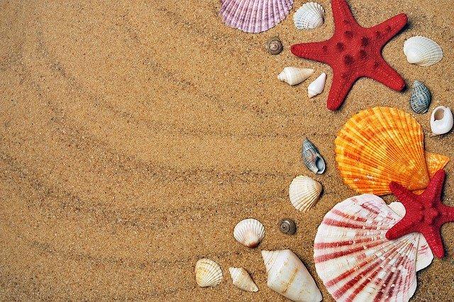 Coquillages et étoiles de mer sur une plage de sable.